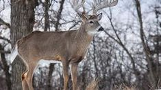 20 Deer Hunting Lies Your Granddaddy Told You Deer Hunting Tips, Big Game Hunting, Hunting Rifles, Hunting Gear, How To Tan, Real Tree Camouflage, Deer Pictures, Bull Elk, Camouflage Patterns