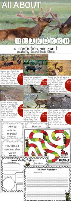 Reindeer nonfiction - fact pages, reading and writing response, games and more!