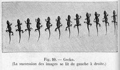 BLEU GRIS: CHRONOPHOTOGRAPHIE