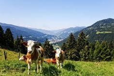 Ausblick ins #Murtal. (c) TVB Murau-Kreischberg, ikarus.cc Berg, Austria, Mountains, World, Nature, Poster, Travel, Animals, Beautiful
