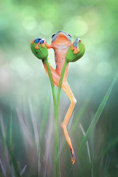 ~~Expecting rain   frog by Kurit Afsheen~~
