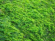 Image result for moss texture