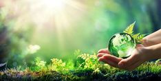 Hands Holding Globe Glass In Green Forest - Environment Concept - Buy this stock photo and explore similar images at Adobe Stock Julian Of Norwich, Illustrator, Heart Of Life, Happy Earth, Environment Concept, Living A Healthy Life, Stock Foto, Go Green, Photo Illustration