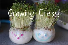 Growing Cress Heads and Cress Initials! - The Imagination Tree