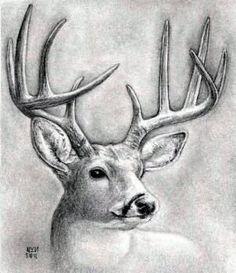 How to draw a deer head, buck, dear head