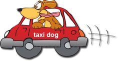 taxi dog - Cerca con Google