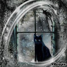 Black cat in winter window