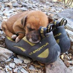 A crag dog in the making.