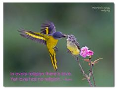 Let love be your only karma ❤🧡💛💚💙💜✨ Religion, Bird, Love, Karma, Happy, Foundation, Animals, Amor, Animales