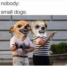 Really Funny Memes, Stupid Funny Memes, Funny Relatable Memes, Haha Funny, Funny Stuff, Memes Humor, Cat Memes, Animal Jokes, Funny Animals