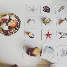 Matching shells with image cards. Great Montessori toddler activity idea!