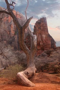 Temple of Sinawava in Zion National Park, Utah.