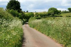 Devon country lanes and hedgerows