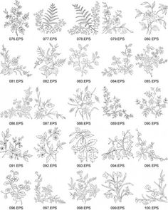 Flowers vector line drawing of plant capacity figure -4