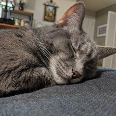 Kitty's already bored of the #SuperBowl. #sleepingcat #cutenessoverload #catstagram #catsofinstagram #cats #cat #cats_of_instagram #cutecats #cutecat #kitty #kittycat #kittys #petsofinstagram #pets #pet #animalsofinstagram #animal #cute #cuteness