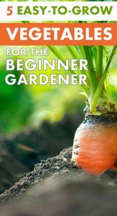 5 Easy to grow vegetables #vegetable_gardening - 101 Gardening