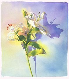 Lily by Marlies Merk Najaka. Gicl;e print of an original watercolor painting. Printed on deckle-edged Arches watercolor paper. Signed and numbered below the image. Limited edition of 50. Paper size is 29