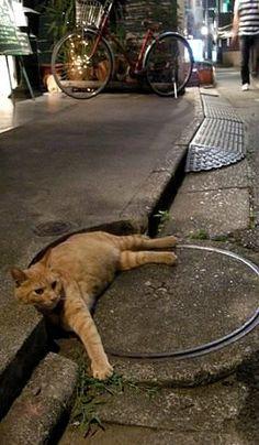 Street Cat..