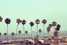 i love palm trees <3 i will live in a place that has them everywhere you turn!