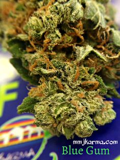 Blue Gum  Blueberry and Bubblegum crossed makes this amazingly sweet strain that test over 18% THC the strain that can rock your world today if you come and see us. A half oz is only $105!! Mix and Match between ALL strains!  mmjkarma.com