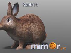 our favorite rabbit: