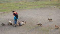 Ōkunoshima (Bunny Island) is an island located in a Japanese inland sea between Hiroshima and Shikoku.