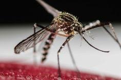[Detalles] Confirman primer caso de microcefalia por zika en...