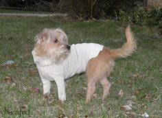 DIY Doggie Turtle Neck Sweater