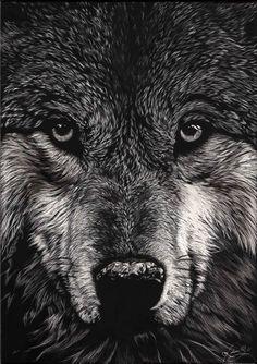 Scratch Art Gallery - Scratchbord Art by Allan Ace Adams - unreal wolf Scratchboard Art, Scratch Art, Bird Drawings, Animal Drawings, Hand Art, Wildlife Art, Chiaroscuro, Medium Art, Art Tutorials