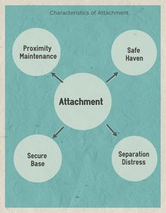 I need attachment theories ? for essay !?