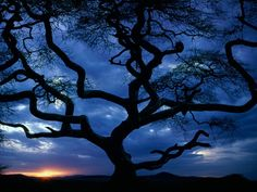 Silhouetted Snarled Tree and Limbs Wallpaper from Nature. A snarled tree and its misshapen limbs silhouetted against the darkening sky, in Serengeti National Park, Tanzania. Amazing Sunsets, Amazing Nature, Amazing Things, Beautiful Things, Beautiful Moon, Beautiful World, Simply Beautiful, Socotra, Plantas Bonsai