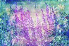 Um sonho lindo fundo com Prado de flores — Imagem Stock #90726356