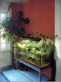 10 Tips on Designing a Freshwater Nature Aquarium Aquarium Garden, Nature Aquarium, Aquarium Fish Tank, Planted Aquarium, Fish Tanks, Aquascaping, Fish Tank Terrarium, Aquarium Terrarium, Aquarium Design