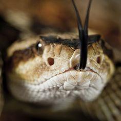Rattlesnake Safety for Pets