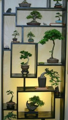 Houseplants for Better Sleep Shohin Mame Making A Big Impact On Multi-Level Bonsai Display Stand Complimented W Suiseki. Bonsai Indoor, Ficus Bonsai, Bonsai Plants, Bonsai Garden, Bonsai Trees, Wisteria Bonsai, Bonsai Flowers, Mame Bonsai, Juniper Bonsai