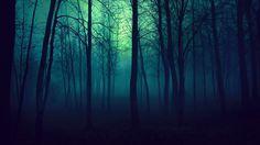 Dark Forest Light Nature Trees Misty Beautiful Fog Mist Wallpaper HD
