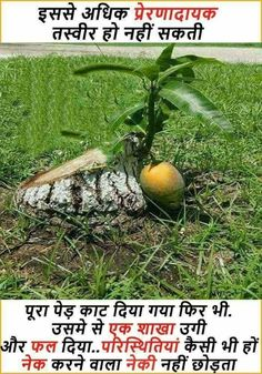 Save Tree Hindi slogan for Earth Day Environment ...