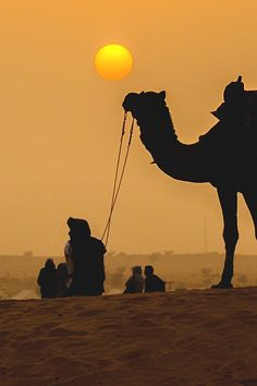 Beautiful - a camel at sunset Camelus, Deserts Of The World, Desert Life, Morocco, Cool Pictures, Sunrise, Scenery, Places To Visit, Landscape