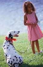 Como ensinar o seu cão a andar com trela