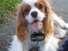 #dog gps  Like,Repin,Share, Thanks!