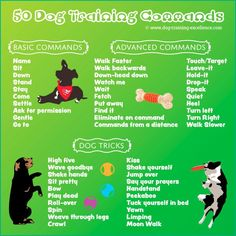 Pet Training - dog training commands, dog obedience commands, list of dog commands This article help us to teach our dogs to bite just exactly the things that he needs to bite Dog Commands Training, Basic Dog Training, Potty Training, Service Dog Training, Training Pads, Dog Agility Training, Dog Obedience Training, Guide Dog Training, Police Dog Training
