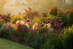 Purple allium, Gladiolus byzantinus and grasses at Pettifers Garden, UK