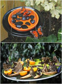 DIY Butterfly Feeder And Waterer
