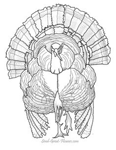 turkey head coloring page - turkey hunting coloring pages head red white and blue
