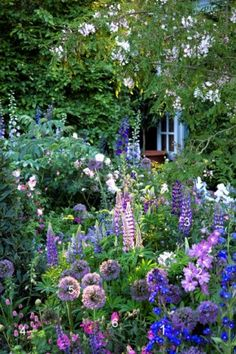 Blue and Purple English Cottage Garden