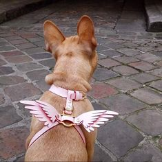 - Dogs - NIELS PEERAER - Wings leather dog harness - Tap the pin for the most adorable pa. NIELS PEERAER - Wings leather dog harness - Tap the pin for the most adorable pawtastic fur baby apparel! You'll love the dog clothes and cat clothes! Animals And Pets, Cute Animals, Wild Animals, Pet Clothes, Dog Clothing, Chihuahua Clothes, Clothes Hangers, Dog Supplies, Dog Care