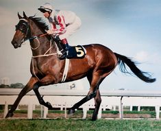 MIGHT AND POWER (NZ) B/Br g 1993, Zabeel - Benediction. 33 starts, 15 wins, 8 placings. World Champion Stayer 1997, Australian Horse of the Year 1998 and 1999. Inducted Australian Racing Hall of Fame 2002. Winner Caulfield and Melbourne Cups double 1997, W.S. Cox Plate 1998. Retired in 2000 and resides at Living Legends in Victoria, making lots of public appearances.