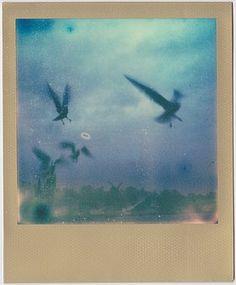 'Ufo & Möwen Apokalypse' ein Foto von 'AllzweckJack'