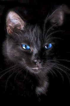 "deepsoulfury: ""Black Cat """