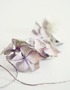 Fräulein Klein : Thank you and Take 5 Flowers Nature, Dried Flowers, Pink Flowers, Beautiful Flowers, Simply Beautiful, Wilted Flowers, Happy Flowers, Beautiful Things, Color Lavanda